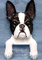 Boston Terrier Gifts Figurines