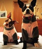 Boston Terrier Father's Day Gifts