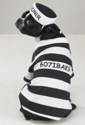 Boston Terrier Dog Halloween Costumes