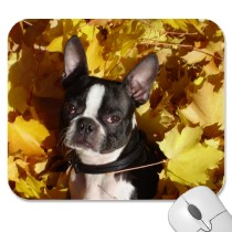 Boston Terrier Pups Mousepad