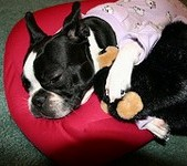 Boston Terrier Gifts - dog beds
