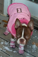 She's wearing the cutest little pink dog boots!