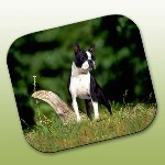 Boston Terrier gifts mousepads