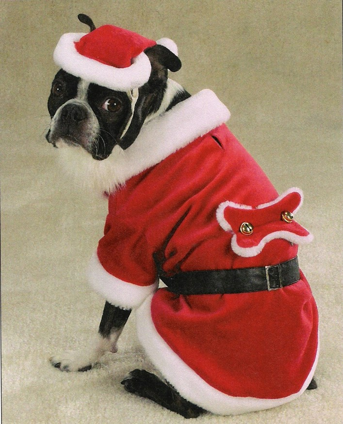 Dog Halloween costumes for Boston Terrier Dogs from Boston Terrier ...