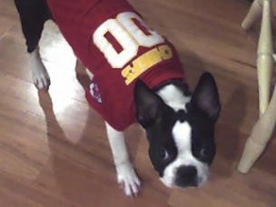 Slugger - the die hard Chiefs fan