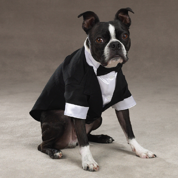 dog halloween costumes for boston terrier dogs from boston terrier gifts make your boston look great - Boston Terrier Outdoor Christmas Decoration