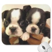 Boston Pups Mousepad