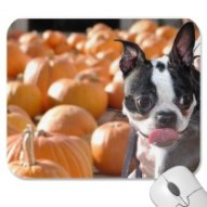 Boston Terrier Dog in Pumpkin Patch Mousepad