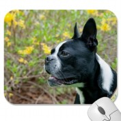 Boston Terrier Dog in Yellow Flowers Mousepad