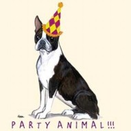 Boston Terrier Party Animal Note Card