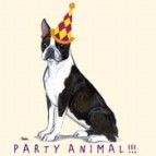 Boston Terrier Party Animal Note Cards