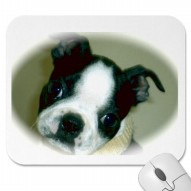 Boston Terrier Puppy Dog  Mousepad